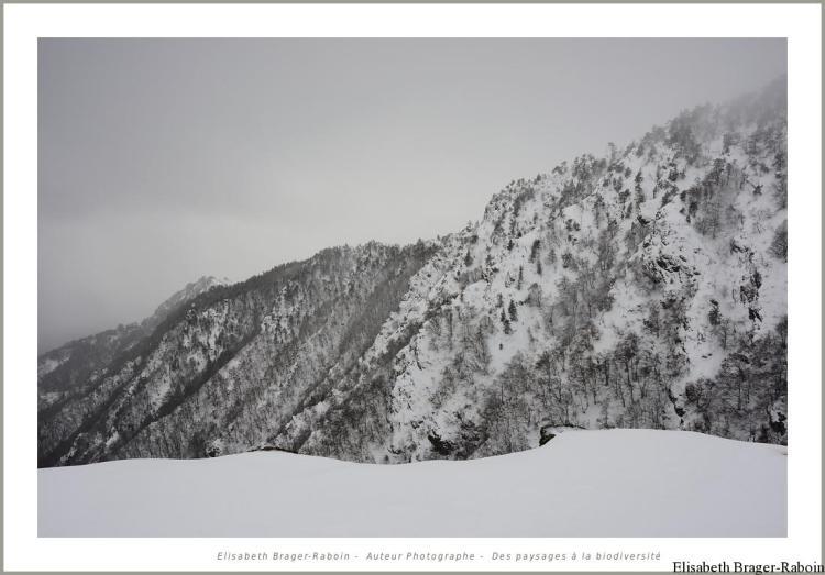 Les pentes schisteuses du Mont Aigoual