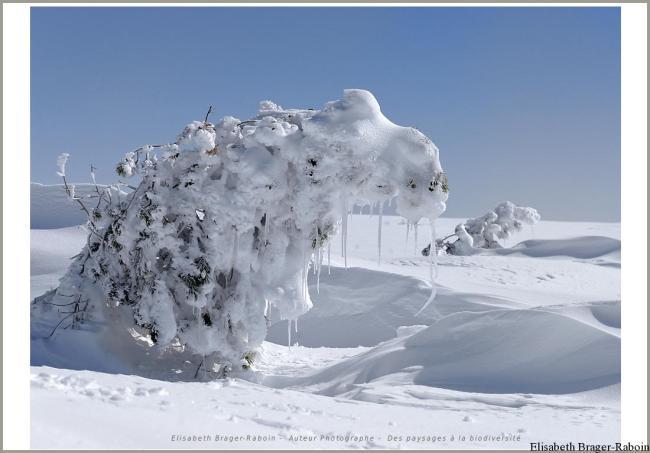 L'arbre plié