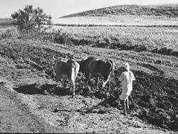 farmer_africa