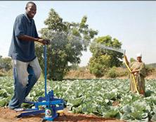 farmland in africa