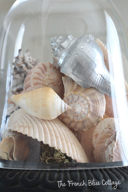 silver seashell under a cloche
