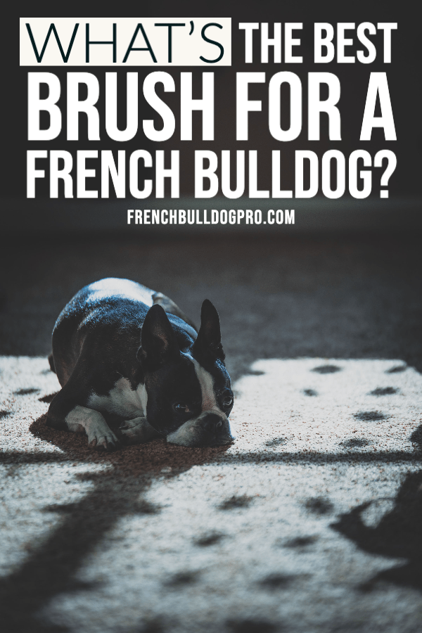 best brush for french bulldog