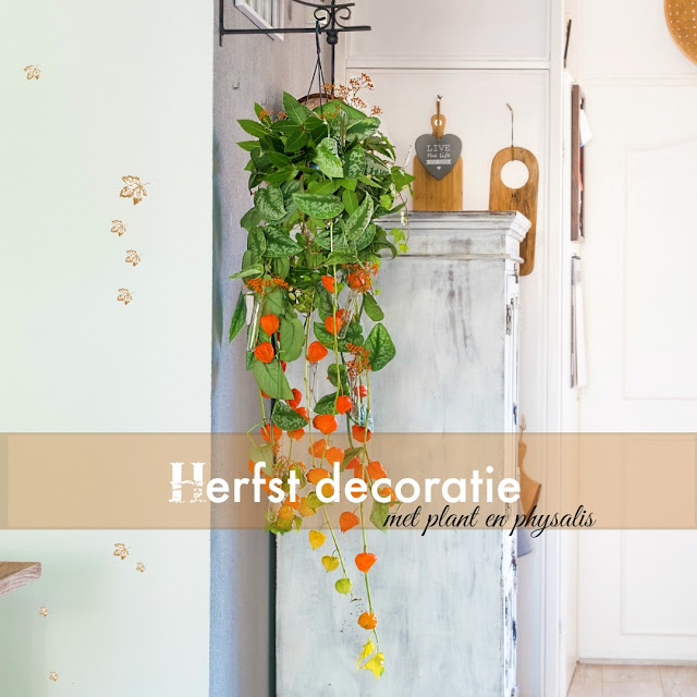 Autumn decoration with plant and physalis (lanterns)