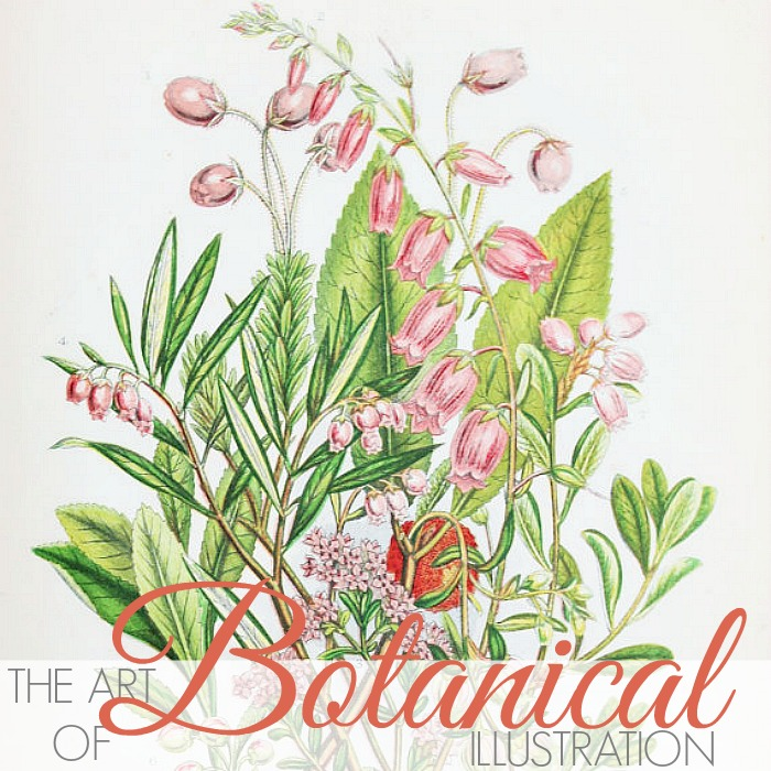 THE ART OF WOMEN ARTISTS | BOTANICAL ILLUSTRATIONS