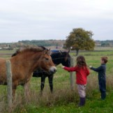 childfriendly-horses