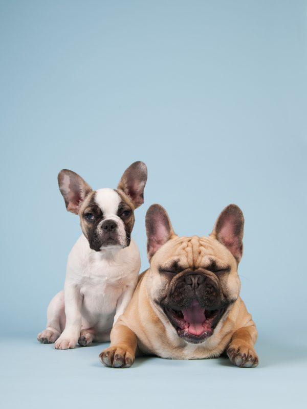 benefits of CBD for puppy and adult dog