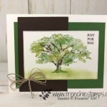 Shaded tree from Rooted in Nature. Learn how to have multi color of leaves. Using Sponge Dauber. All supplies by Stampin