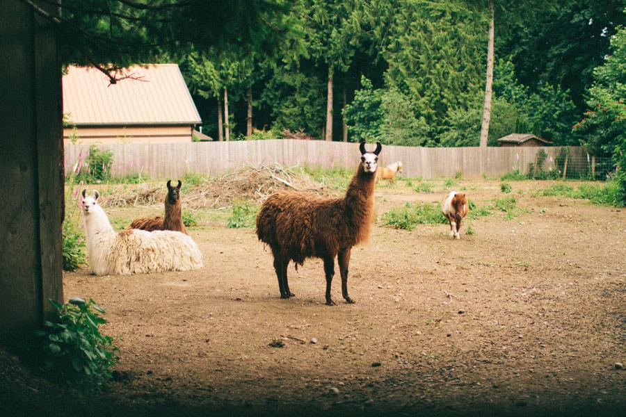Backyard-Wedding-Animals-Giant-Letters-07