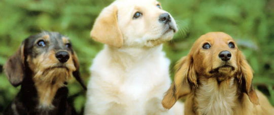 Cute puppies looking up at the sky.