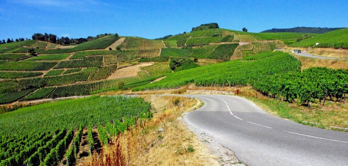 Wine lovers' tips: Alsace Wine Route near Turckheim © French Moments