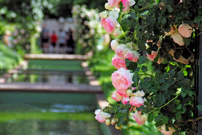 Roses on the Coulée Verte René-Dumont © French Moments