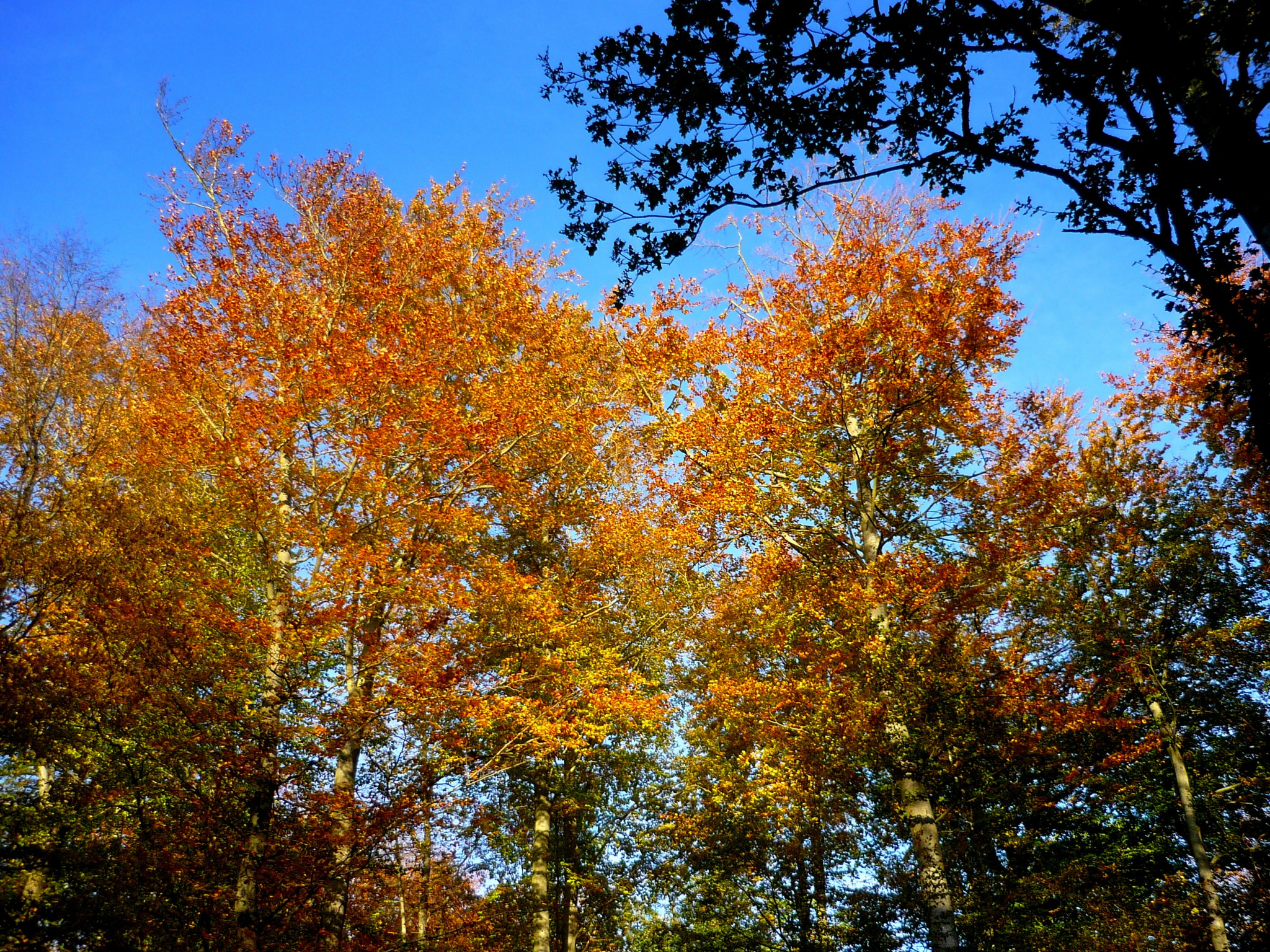 French Quotes And Sayings About Autumn French Moments