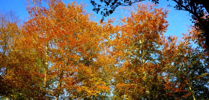 French Quotes and sayings about Autumn © French Moments