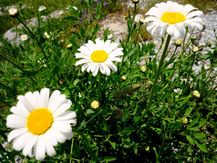 Marguerite © French Moments