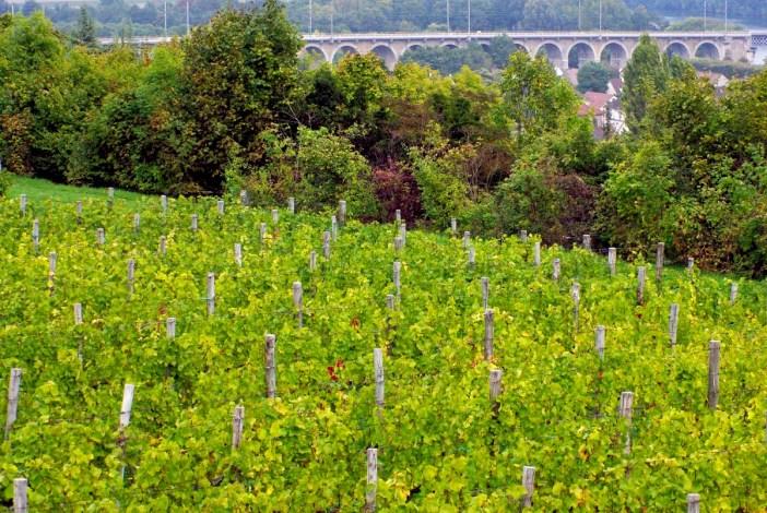 Vineyards of Saint-Germain-en-Laye © French Moments