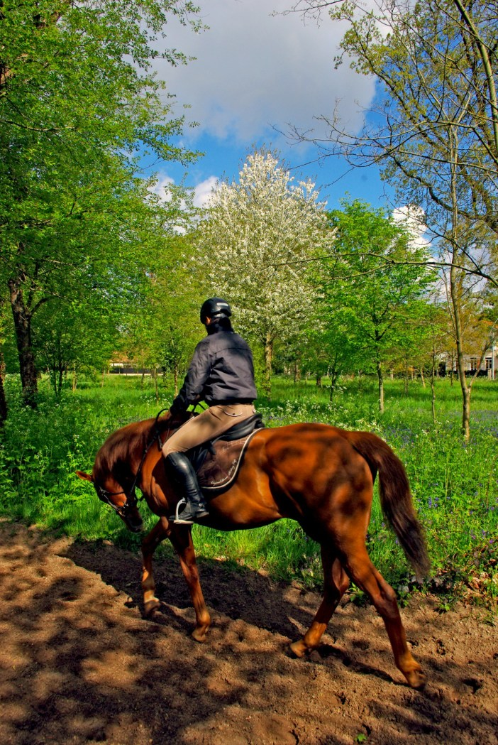 Horse riding in the Park of Maisons-Laffitte © French Moments