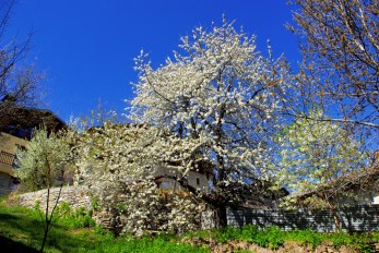 Granier-sur-Aime in Spring © French Moments