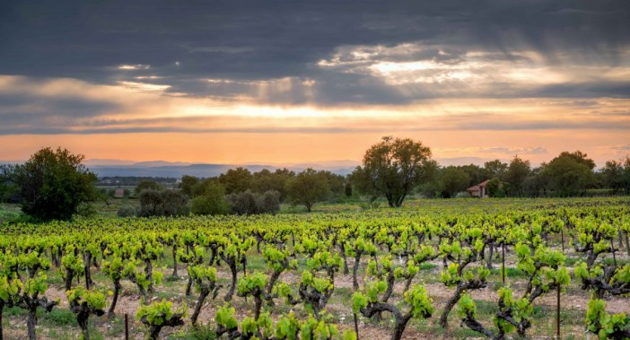 A tranquil sunset in the Provençal vineyards - Stock Photos from Troy Wegman - Shutterstock