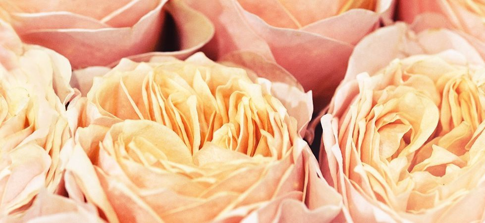 repeatable-roses