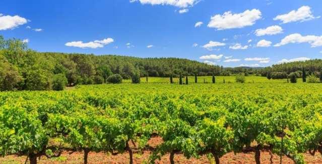 Domaine Le Clos d'Ours vines