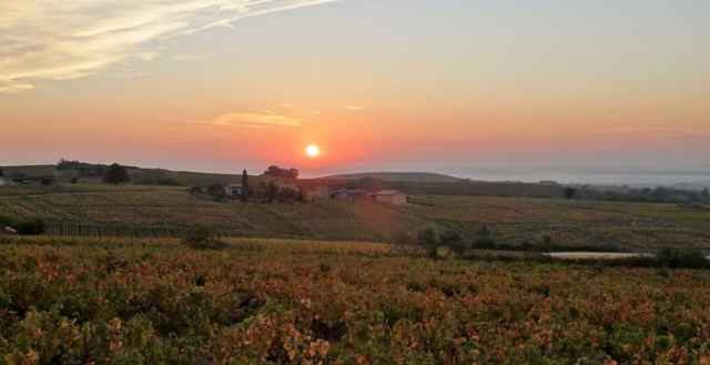 Domaine Lachat, Beaujolais