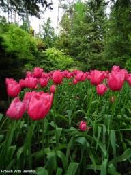 tulipes-royal-botanical-gardens