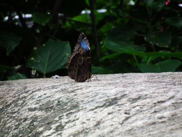 papillon-butterfly-conservatory