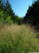 herbe-parc-algonquin