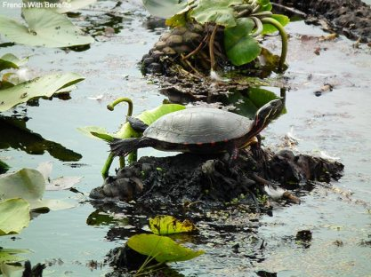 tortue-point-pelee-canada