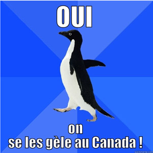 pingouin-canada