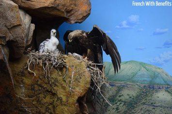 royal-alberta-museum-aigle