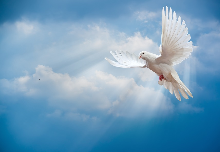 Remplis-moi de Ton Saint-Esprit afin que je vive dans l'esprit.