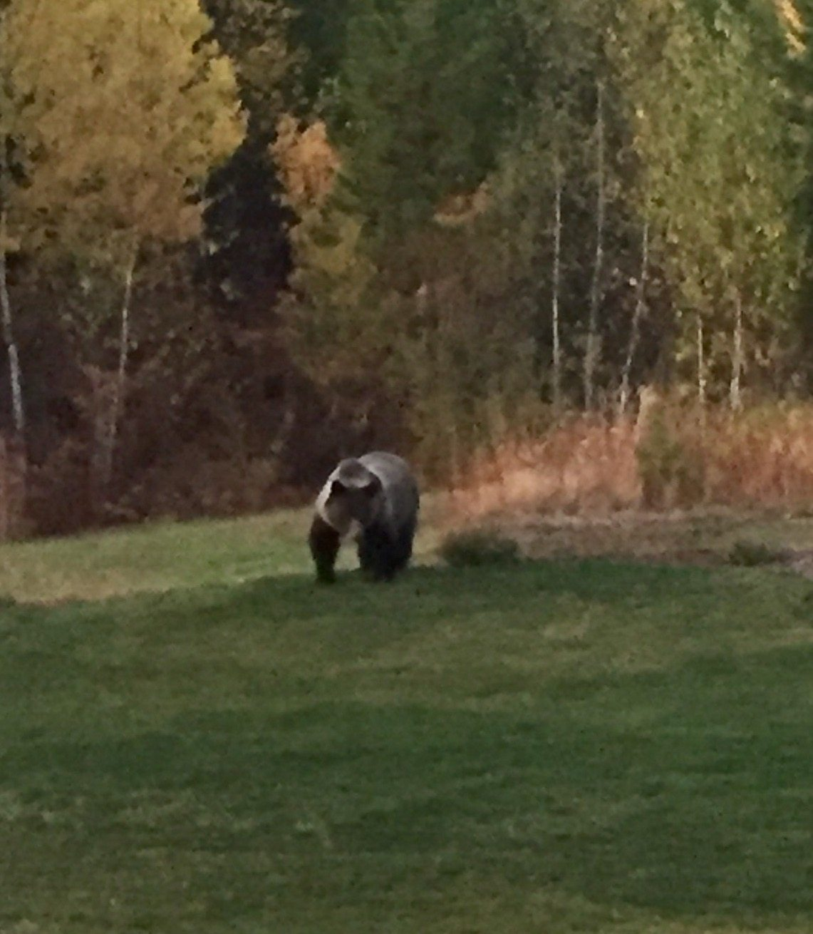 This is Montana; Theres a Grizzly in my yard.