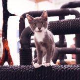 White Columns: Cat habitat, Cat Show