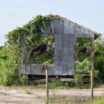 Deborah Mitchell Artist Guide Everglades