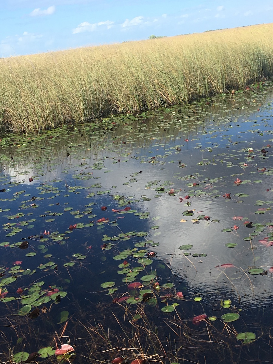 Arists in Residence in Everglades