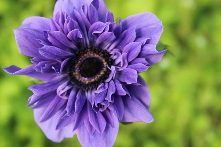 hyacinthsandotherstuff 045