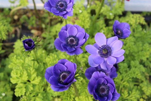 hyacinthsandotherstuff 046