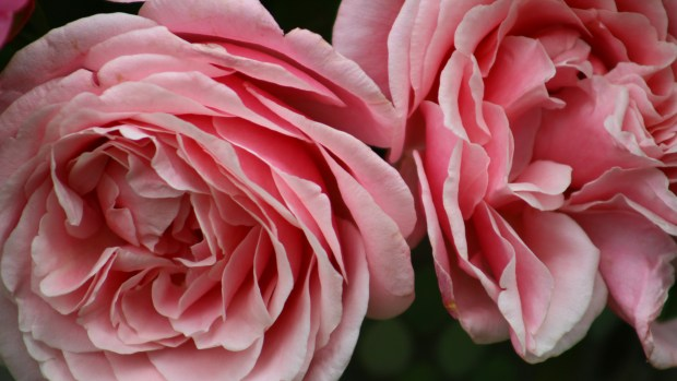pink_arrangement 050