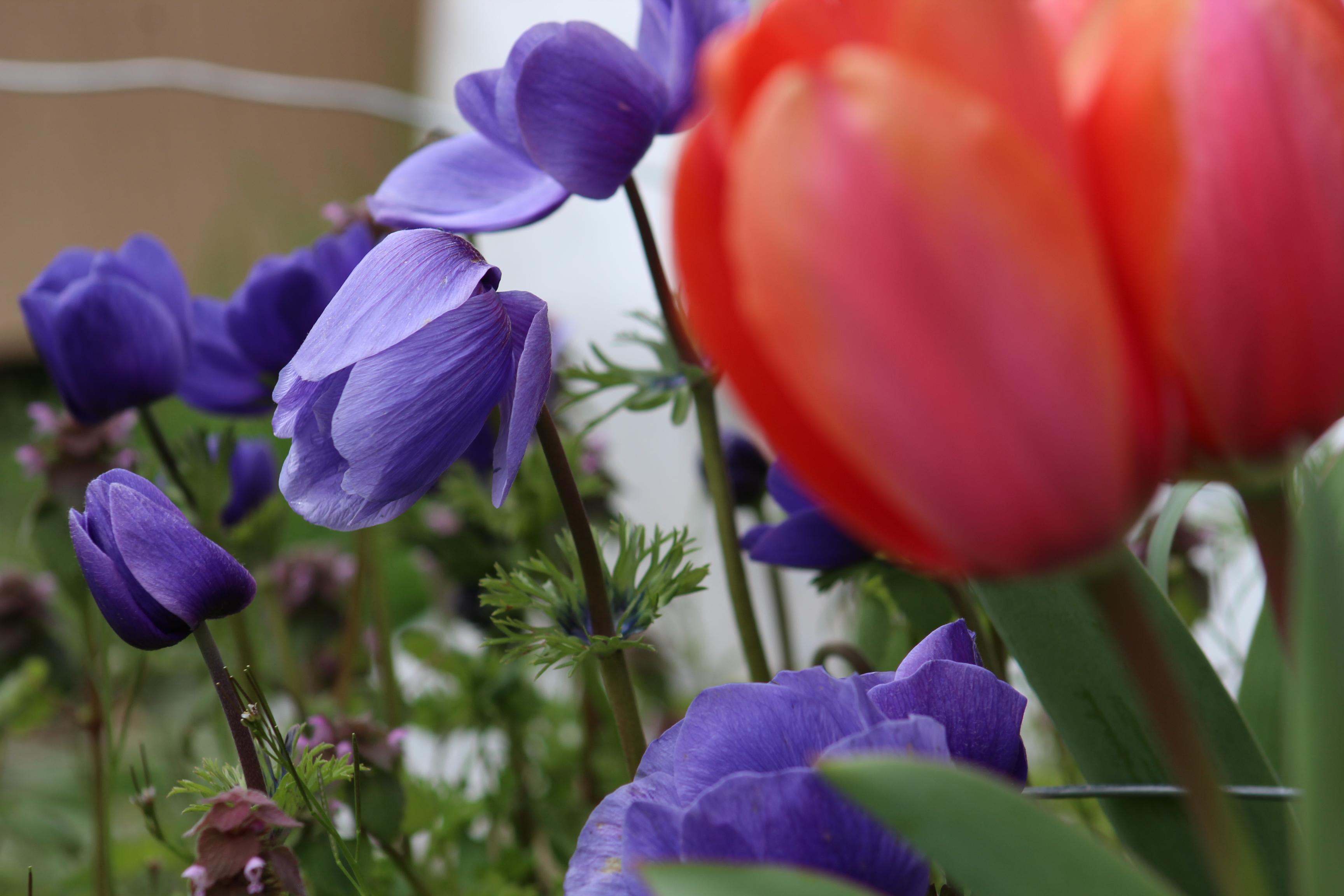 Flower Garden Update – Week One – April 2018