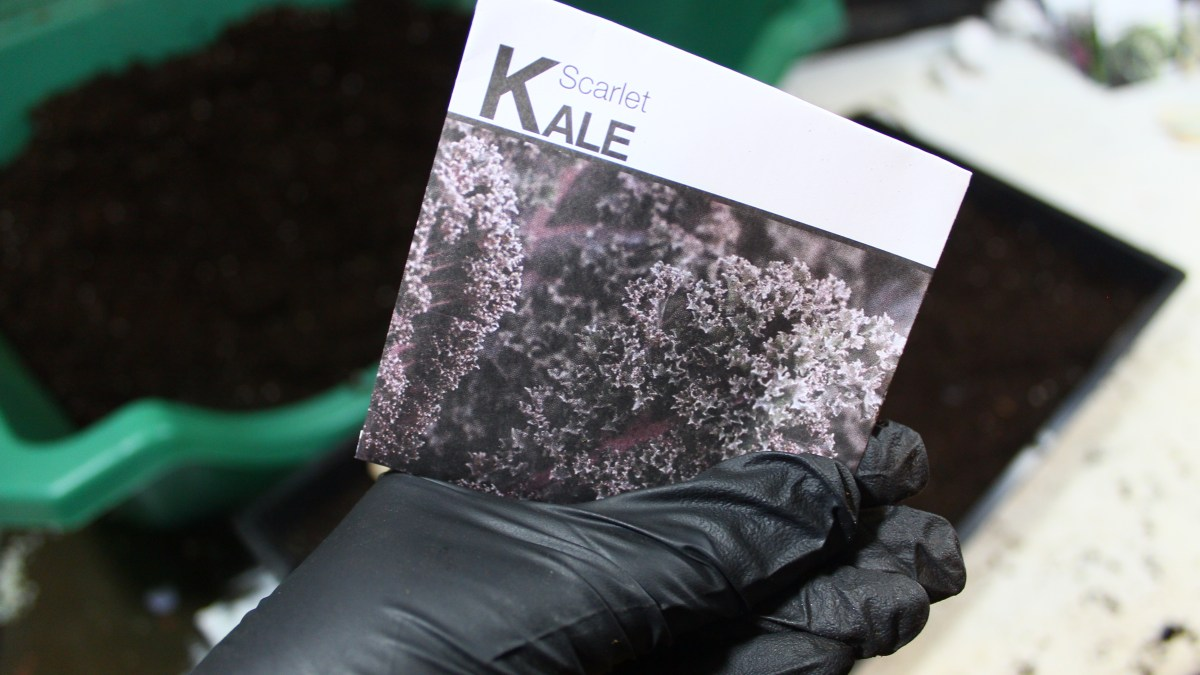 Winter Sowing Kale in Zone 6/7