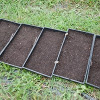 Sowing Biennial Flower Seeds into Trays for the Cut Flower Garden
