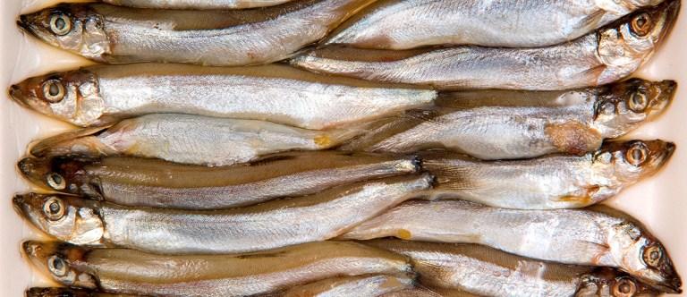 Shelf Life of Fish