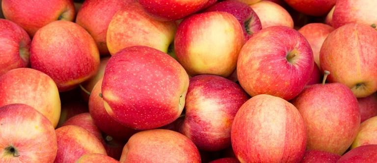 Shelf Life Of Apples