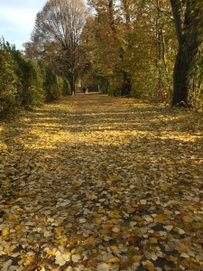 Herbst-Jogging