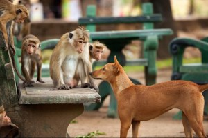 Look at these guys in MONKEY KINGDOM. Photo courtesy of Disney.