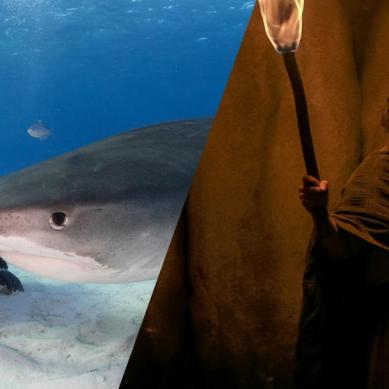 Sea truths and horror abound: 'FEAR STREET 3' and shocking, heart-wrenching documentaries about ocean life