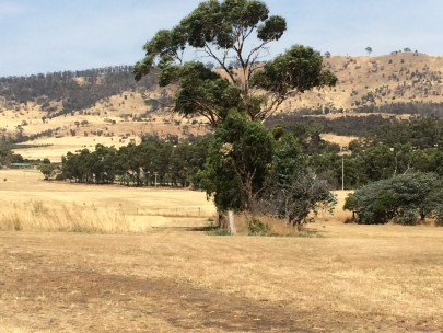 Gums and (dry) pasture
