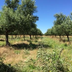 2017-01-07-grove-pruning