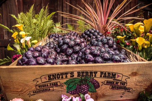 Knott's Berry Farm celebrates annual Boysenberry Festival